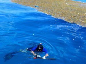 spearfishing ashley hoyt
