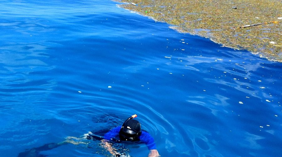 Zen and the Art of Spearfishing